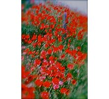 Poppy flowers  - wonderful spring et Austria (Niederösterreich) . . by Brown Sugar . Views (142). Dziękuję ! OK! VSOP !!! Fav (2) ! Photographic Print