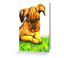 Rocky takes a rest 129 views Greeting Card