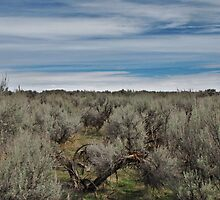 Idaho High Desert... by trueblvr