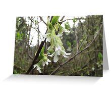 Tree Blossom Greeting Card