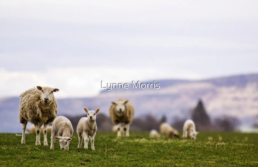 Ewe Want Me To Smile? by Lynne Morris