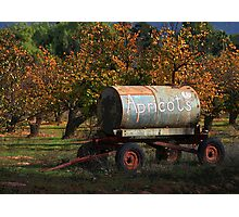 Apricots for Sale Photographic Print