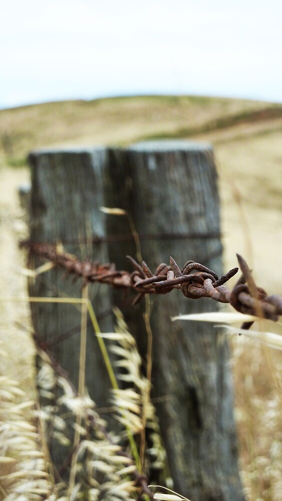 Barbed Wire Fence by Alexander Brown