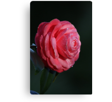 One for the ladies! 0509 Canvas Print