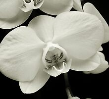 Orchid Train by Kathilee