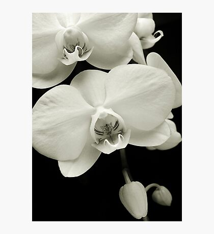 Orchid Train Photographic Print