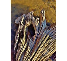 Sunny Driftwood Photographic Print