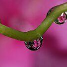 Hydrangea drops by Lifeware