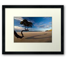 Summers last Rays Framed Print