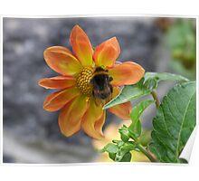Bumble Bee - Christchurch, NZ Poster