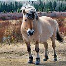 Good Looking Norwegian by JamesA1