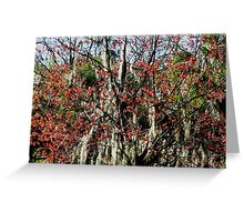 Colours In Trees Greeting Card