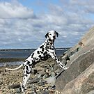 Jay-J on Rock Ledge, Bay Beach by lisa hartman