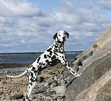 Jay-J on Rock Ledge, Bay Beach by lisa hartman