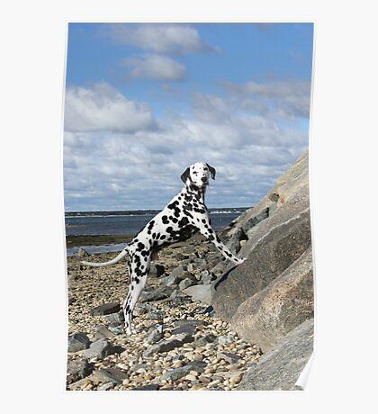 Jay-J on Rock Ledge, Bay Beach Poster