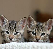 Tiny Tigers II by GreyFeatherPhot