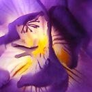 Purple Passion by NancyC