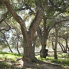 Griffith Park Trees 1 by Donna Grayson