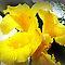 *AVATAR/Yellow Flower - Enchanted Flowers*