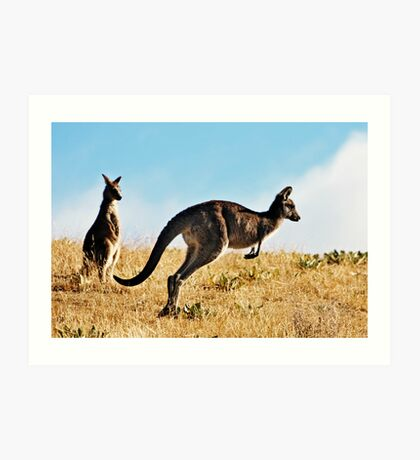 Two Kangaroos Art Print