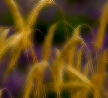 Mystic Grasses_2 by sundawg7