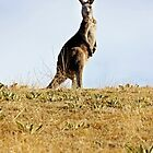 Kangaroo  by Bluesoul Photography