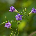 Wild Flower by upadhyay