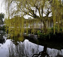 Budding Willow - Sun Yat Sen Classical Chinese Garden by Kathryn  Young