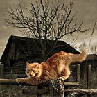 Red cat by Julia Shepeleva