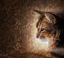 Somali cat by Julia Shepeleva