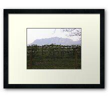 Winery, Tasmania, Australia Framed Print