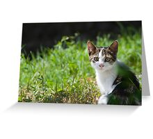 Dun Cat Watching in Grass Greeting Card