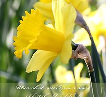 A host of Golden Daffodils by Lisa Banks