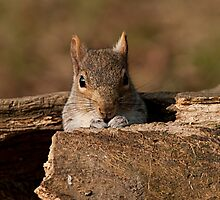 Squirrel doing what they do best..number 2 by cameravan1