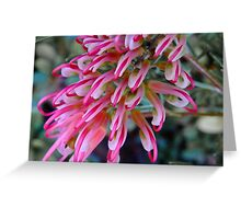 Pink Grevillea - Perth Hills, Western Australia Greeting Card