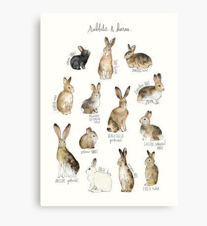 Rabbits & Hares Canvas Print