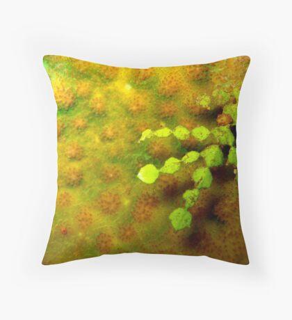Aquatic plant life - Timor Leste Throw Pillow