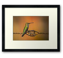 Hummingbird on a Barbed Wire 2 Framed Print
