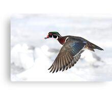 Wood Duck on High Metal Print