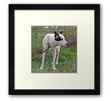 """Hank"" The Sheepdog Framed Print"