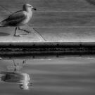 Gull by marcopuch