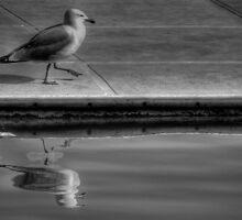 Gull by marcopuch