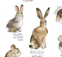 Rabbits & Hares Sticker