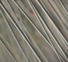 Reeds by Monique Alvis