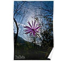 Anemoni 4 Poster