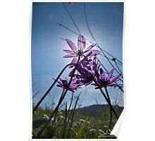 Anemoni 5 Poster