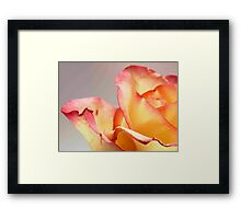 Rose - close up view Framed Print