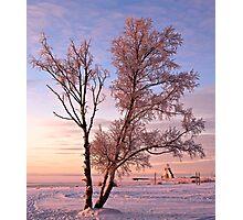 Frozen On The Seashore Photographic Print