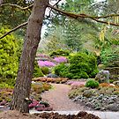Returning Spring at VanDusen Botanical Garden by Carol Clifford