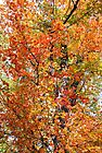 Confetti Autumn by Margie Avellino